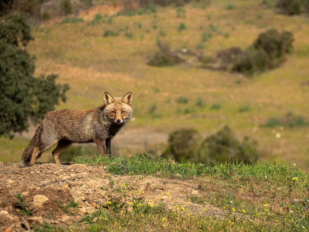 wildlife fotografie